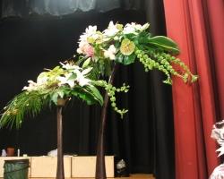tree-fern