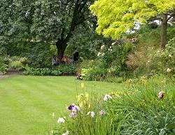 lawn-gs.jpg