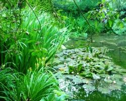 a-pond