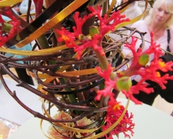 jatropha-flower