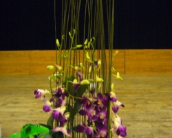 orchids-with-structure.jpg