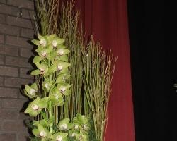 sb-orchids