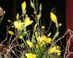 sb-yellow-lily